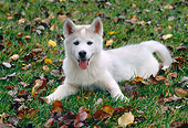 PUP 34 GR0022 01
