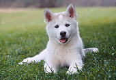 PUP 34 GR0023 01