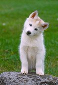 PUP 34 GR0024 01