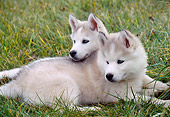 PUP 34 GR0027 01