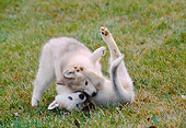 PUP 34 GR0029 01