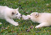 PUP 34 GR0030 01