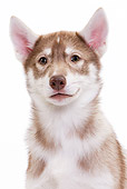 PUP 34 JE0001 01