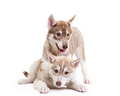 PUP 34 JE0002 01