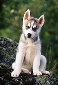 PUP 34 KH0001 01