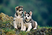 PUP 34 KH0002 01