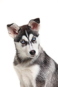 PUP 34 PE0001 01
