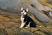 PUP 34 RK0005 09