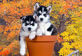 PUP 34 RK0012 08