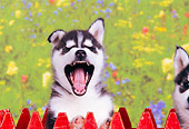 PUP 34 RK0014 01