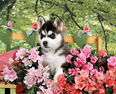 PUP 34 RK0020 05