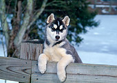 PUP 34 CE0001 01