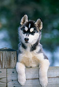 PUP 34 CE0002 01