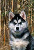 PUP 34 CE0003 01