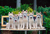 PUP 34 CE0006 01