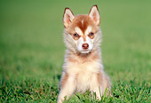 PUP 34 GR0006 01