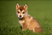 PUP 34 GR0006 03