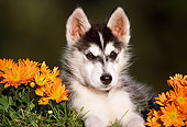 PUP 34 GR0009 02