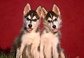 PUP 34 GR0012 02