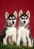 PUP 34 GR0013 01