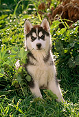 PUP 34 RC0001 01