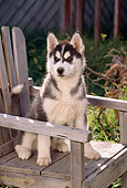 PUP 34 RC0003 01