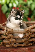 PUP 34 RC0005 01