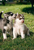 PUP 34 RC0008 01