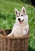PUP 34 RC0010 01
