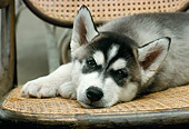 PUP 34 RC0011 01
