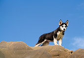 PUP 34 RK0004 02