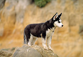 PUP 34 RK0006 02