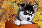 PUP 34 RK0011 02