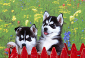 PUP 34 RK0016 03