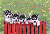 PUP 34 RK0018 02