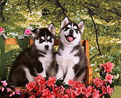 PUP 34 RK0021 02