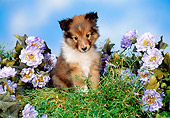 PUP 35 FA0001 01