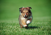 PUP 35 GR0024 01