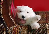 PUP 35 GR0026 01