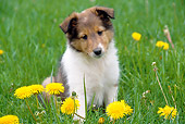 PUP 35 GR0029 01