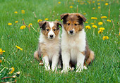 PUP 35 GR0031 01