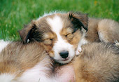 PUP 35 GR0036 01