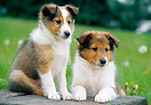 PUP 35 GR0037 01