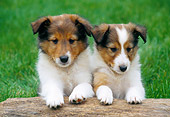 PUP 35 GR0038 01