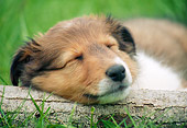PUP 35 GR0041 01