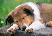PUP 35 GR0044 01