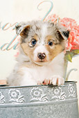 PUP 35 JE0004 01