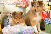 PUP 35 JE0005 01