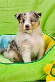 PUP 35 JE0008 01