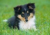 PUP 35 JS0002 01